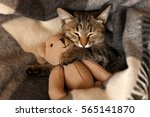 Stock photo gray kitten sleeping on gray plaid wool blanket with tassels embracing soft beige knitted toy 565141870