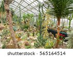 tropical plants in a greenhouse | Shutterstock . vector #565164514