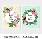 vector tropical cards set. cute ... | Shutterstock .eps vector #565186258