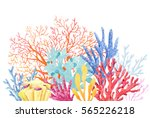 watercolor colorful composition ... | Shutterstock . vector #565226218