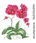 orchid  vector graphic  exotic ... | Shutterstock .eps vector #565254394