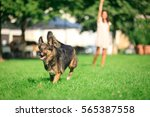 woman with her dog in the park | Shutterstock . vector #565387558
