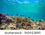 underwater world landscape ... | Shutterstock . vector #565412890