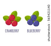 cranberry and blueberry... | Shutterstock . vector #565421140