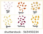 set of fruit illustrations ... | Shutterstock .eps vector #565450234