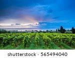 grape harvest  | Shutterstock . vector #565494040