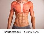 human chest muscle. | Shutterstock . vector #565494643