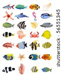 collection of marine animals ... | Shutterstock .eps vector #56551345