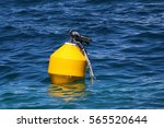 A Yellow Buoy Floating In The...
