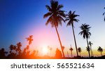 silhouetted of coconut tree... | Shutterstock . vector #565521634