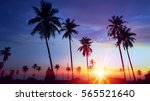 silhouetted of coconut tree... | Shutterstock . vector #565521640