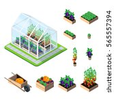 greenhouse isometric set with... | Shutterstock .eps vector #565557394