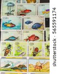 stamp collecting. philatelic.... | Shutterstock . vector #565591174