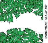 pattern of leaf bush monstera....   Shutterstock .eps vector #565634509