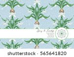 bouquets of snowdrop flowers.... | Shutterstock .eps vector #565641820