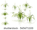 vector isolated reed. water the ...   Shutterstock .eps vector #565671103