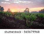 sunrise over hunter valley...   Shutterstock . vector #565679968