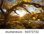 an autumn tree at sunset | Shutterstock . vector #56572732
