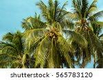 Palm Tree And Sky Tropical...