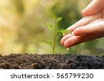 agriculture. plant seedling.... | Shutterstock . vector #565799230