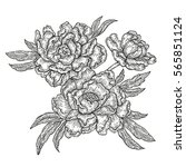 hand drawn spring peony flowers ... | Shutterstock . vector #565851124