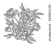 hand drawn spring peony flowers ... | Shutterstock . vector #565851133