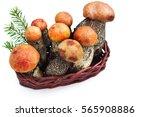mushrooms aspen mushrooms raw... | Shutterstock . vector #565908886