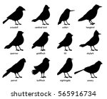 Stock vector silhouettes of little birds 565916734