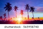 silhouetted of coconut tree... | Shutterstock . vector #565958740