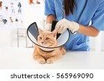 Veterinarian Putting Cone Of...
