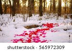 Stock photo road of pink and red rose petals in the winter snow forest sunset trees will you marry me 565972309