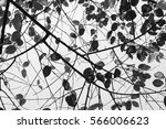 tree branches and leafs nature... | Shutterstock . vector #566006623
