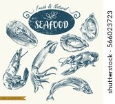 set of hand drawn seafood... | Shutterstock .eps vector #566023723