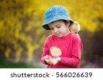 sweet cute child  preschool boy ...