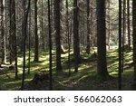 dense forest  illuminated by...   Shutterstock . vector #566062063