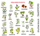 best herbal remedies for... | Shutterstock .eps vector #566099590