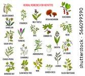 best herbal remedies for... | Shutterstock .eps vector #566099590