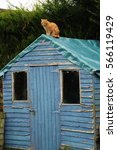 Ginger Cat On The Roof Of An...