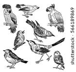 sketches of the different wild... | Shutterstock . vector #566189869