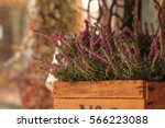 Heather Plants In A Wooden...