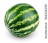Ripe single full watermelon...