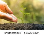 agriculture. plant seedling.... | Shutterstock . vector #566239324