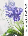 purple orchid   orchids flowers ... | Shutterstock . vector #566296618