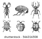 big set of insects bugs beetles ... | Shutterstock .eps vector #566316508