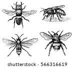 set of bee engraved vintage... | Shutterstock .eps vector #566316619