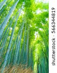 Path To Bamboo Forest At...