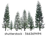 pine tree isolated on white... | Shutterstock . vector #566369494