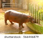 Hipopotamus Hipo In Ho Chi Mihn ...