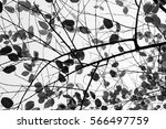 bare tree branches on a pale... | Shutterstock . vector #566497759