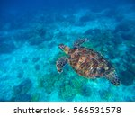 Sea Turtle In Blue Water Above...